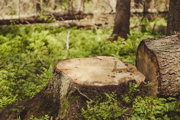 Illegal deforestation