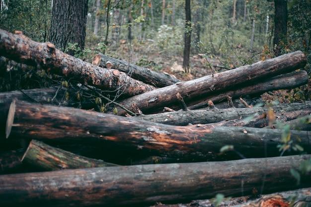 야생 동물 공원에서 숲과 나무의 불법 벌채