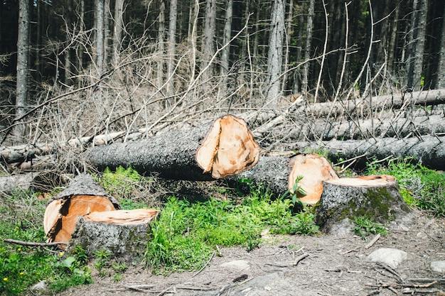 Illegal logging.