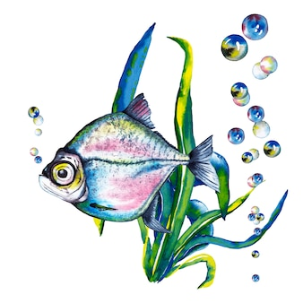 Illustration of big-eyed  blue-pink fish in sea kale and air bubbles. watercolor illustration.