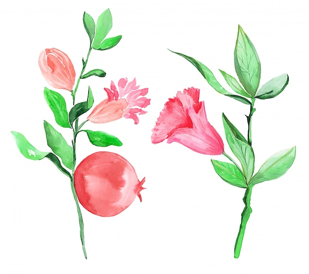 Illustration drawing of a watercolor branch of a pomegranate