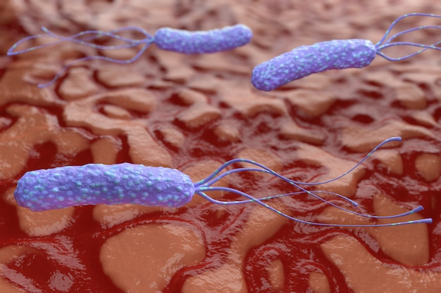 Illustration of helicobacter pylori bacteria on the background of a human stomach. medical concept. 3d render.
