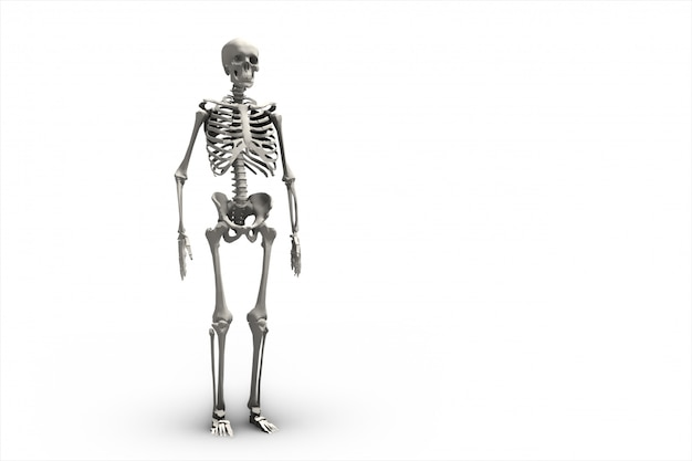 Illustration of a human skeletal system 3d rendering