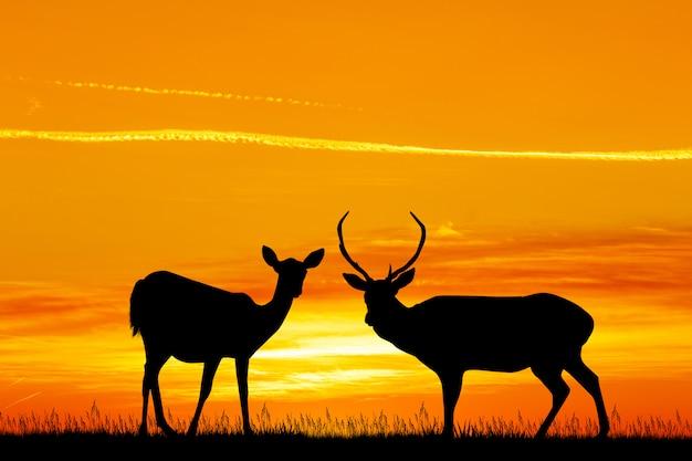 日没時の鹿のイラスト