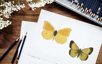 Illustrationist coloring butterfly
