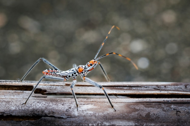 Image of an assassin bug on dry timber. insect. animal