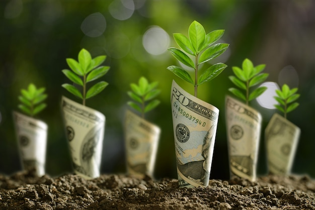 Image of bank notes rolled around plants on soil for business
