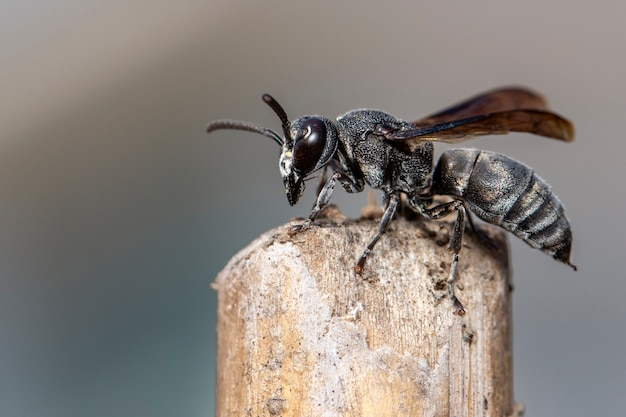 Image of black wasp on the stump on nature.
