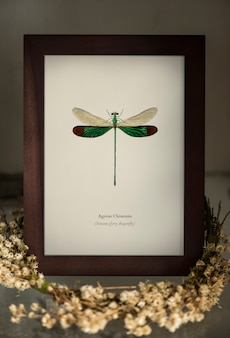 Image of a dragonfly in a photo frame