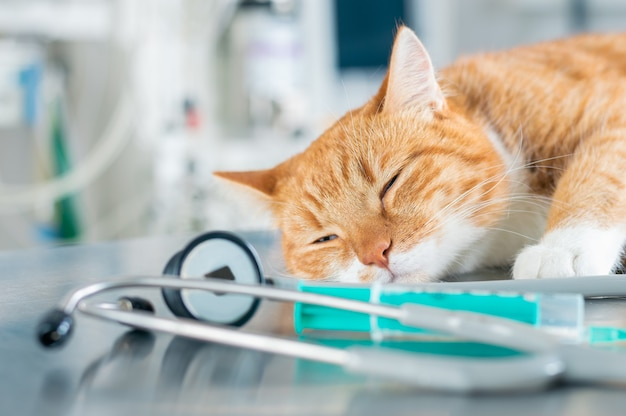 Image of a ginger sleeping cat lying on a table near a syringe and a stethoscope. veterinary medicine concept