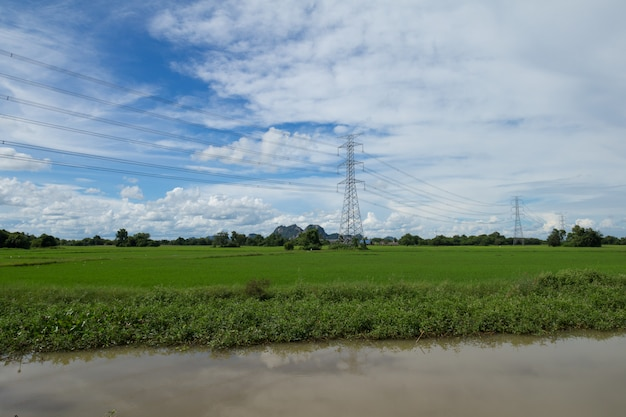 Image of green rice field with blue sky