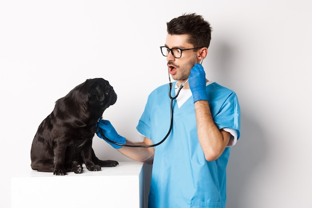 Image of handsome doctor in vet clinic examining dog health, checking pug lungs with stethoscope, standing over white.