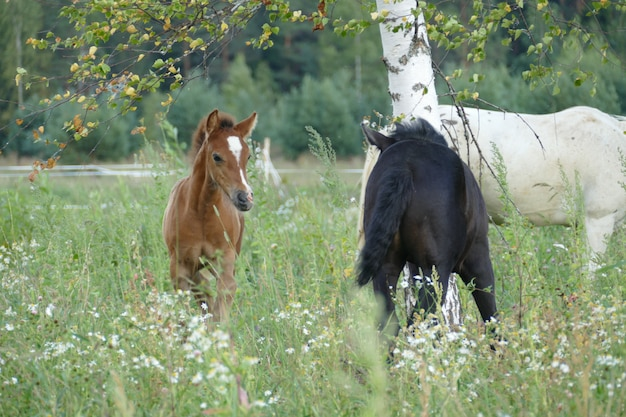 The image of a horse in the forest. natural composition. photography.