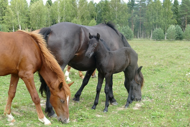 The image of a horse in the forest. natural composition.