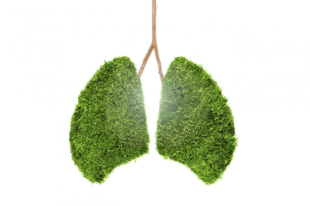Image of human lungs from green moss. isolated