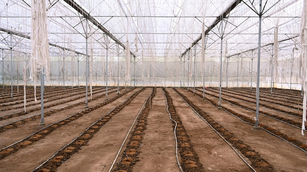 Image of inside of empty greenhouse on a sunny day for preparing the soil for sowing.