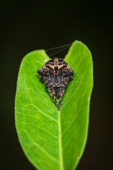 Image of laglaise's garden spider on green leaf. insect.