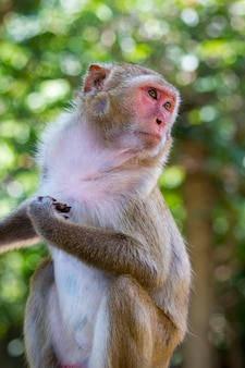 Image of a monkey on nature background. wild animals.