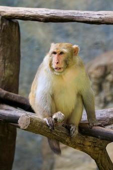 Image of monkey sitting on a tree branch. wildlife animals.