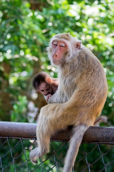 Image of mother monkey and baby monkey in nature . wild animals.