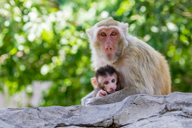 Image of mother monkey and baby monkey on nature