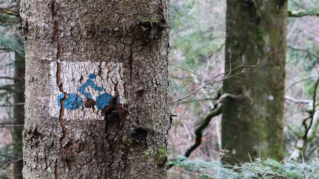 Изображение велосипедиста на дереве в лесу. знак для велосипедистов, указывающий дорогу. крупный план ствола дерева с нарисованным на нем знаком велосипеда.