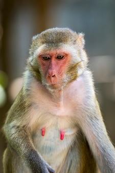 자연 배경에 여성 원숭이의 이미지입니다. 야생 동물.
