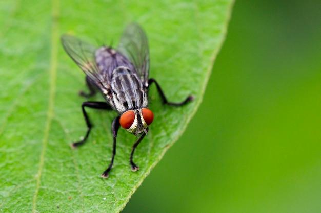Изображение мух (двукрылых) на зеленых листьях. насекомое. животное