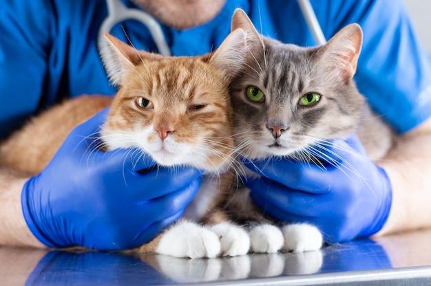 テーブルの上に横たわっている2匹の猫を抱きしめる笑顔の獣医の画像。獣医学の概念