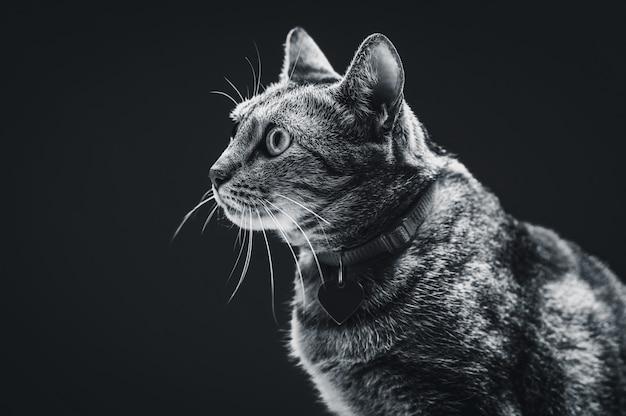 Изображение сурового и злого кота. охотники за мышами. смешанная техника