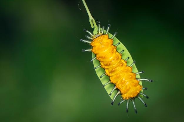 자연 배경에 녹색 잎에 호박 애벌레의 이미지. 곤충. 동물