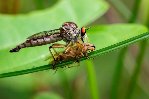 녹색 잎에 먹이 먹는 강도 비행의 이미지. 곤충 동물