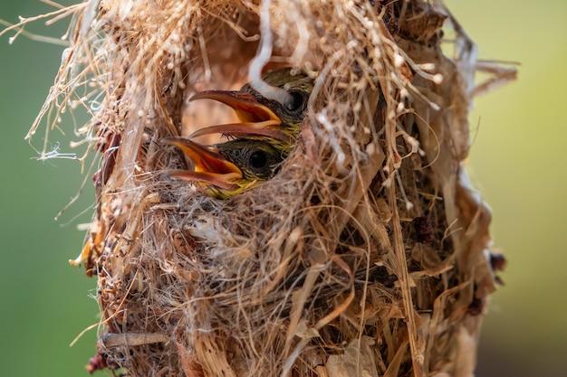 아기 새의 이미지는 자연 배경에 있는 새 둥지에서 어미가 먹이를 주기를 기다리고 있습니다. 새. 동물.