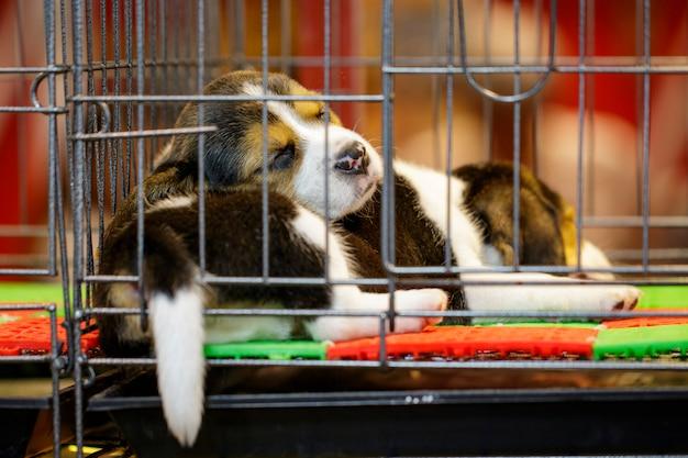 ビーグルの子犬の画像はcageの中にあります。犬。ペット。動物。