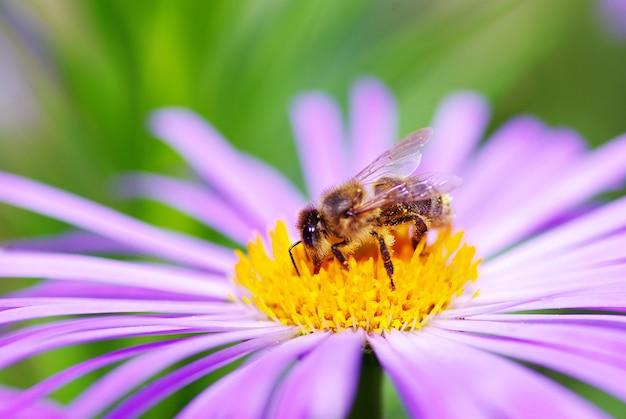 Изображение красивого фиолетового цветка и пчелы