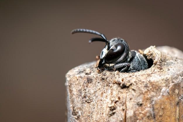 自然の切り株に黒いハチの画像。
