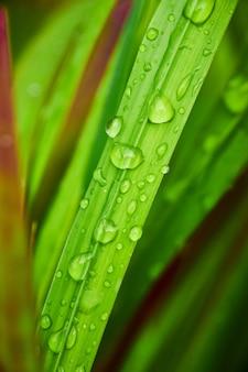 Изображение травинки с каплями воды