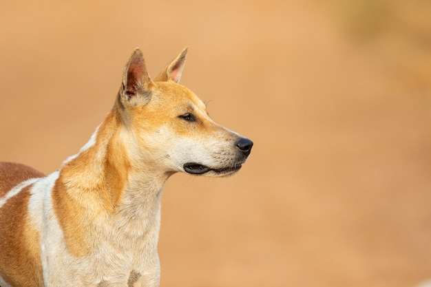 自然の茶色と白の縞模様の犬の画像。
