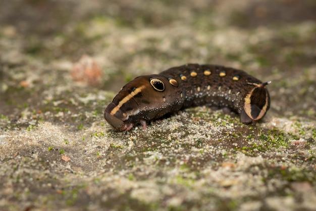 바닥에 갈색 애벌레의 이미지입니다. 곤충. 갈색 벌레.