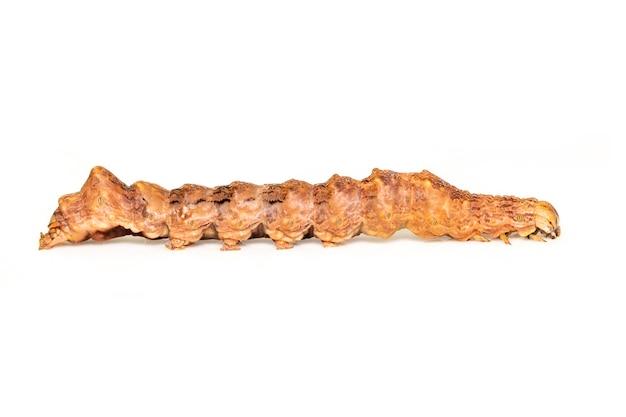 흰색 배경에 고립 된 갈색 애벌레의 이미지. 동물. 곤충.