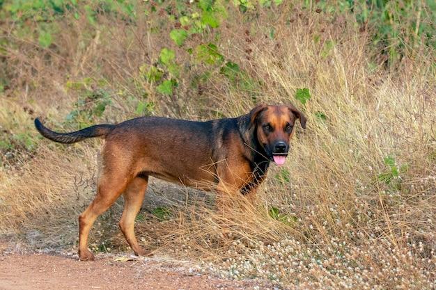 自然の茶色の犬の画像。