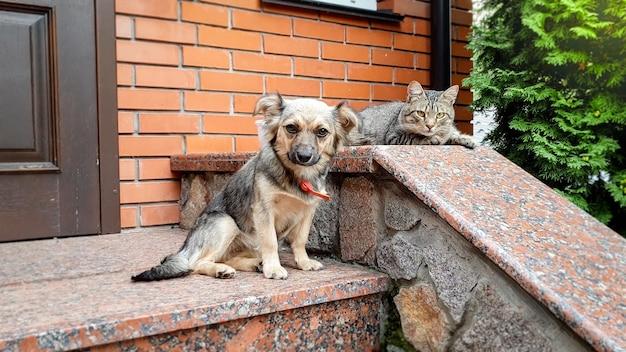 屋外のポーチに横たわるかわいい猫と犬の画像