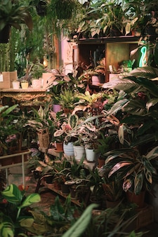 식물학 정원의 선반에 있는 이국적인 녹색 식물과 아름다운 꽃의 이미지