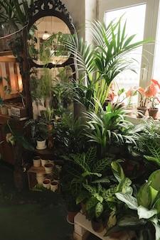 방의 이국적인 녹색 화분과 꽃의 이미지