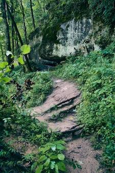 大きな地衣類の岩に対して緑の森を通る砂の森林公園の土の道の画像
