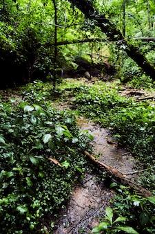 緑豊かな森の植物を通る森の小さな土の道の画像