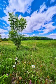 푸른 하늘에 대 한 자연 잔디 필드에 녹색 외로운 나무의 이미지