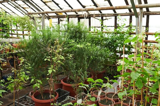 어린 녹색 식물이 있는 온실 이미지