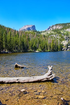 Изображение озера в горах с плавающими бревнами и соснами