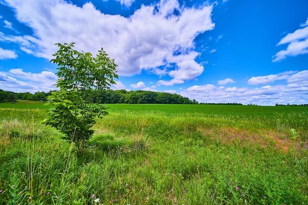 외로운 나무와 푸른 하늘이 있는 열린 녹지와 농지의 풍경 이미지